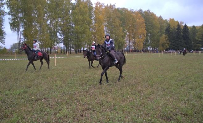 день коня