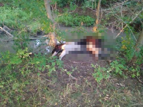 В Татарстане у реки нашли мёртвую корову: туша гниёт вторую неделю