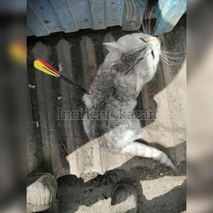 раненый кот стрела
