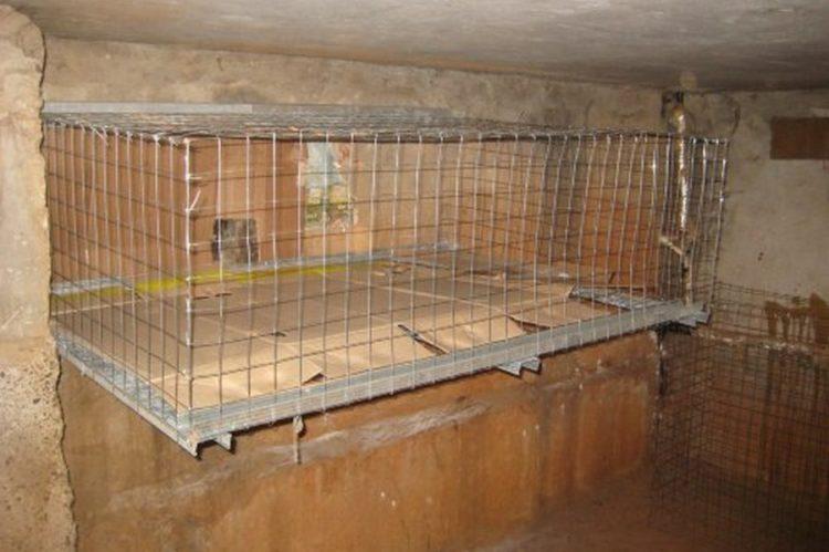 ВНабережных Челнах вподвалах домов установят «тепловые клетки» для кошек