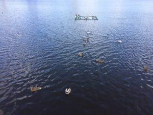 Озеро Кабан утки