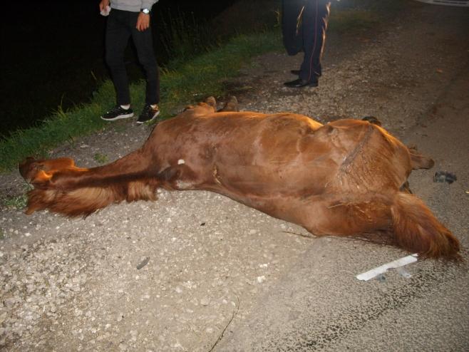Автомобиль «Лада Калина» столкнулся слошадью вЛаишевском районе