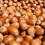 800px-Hazelnuts