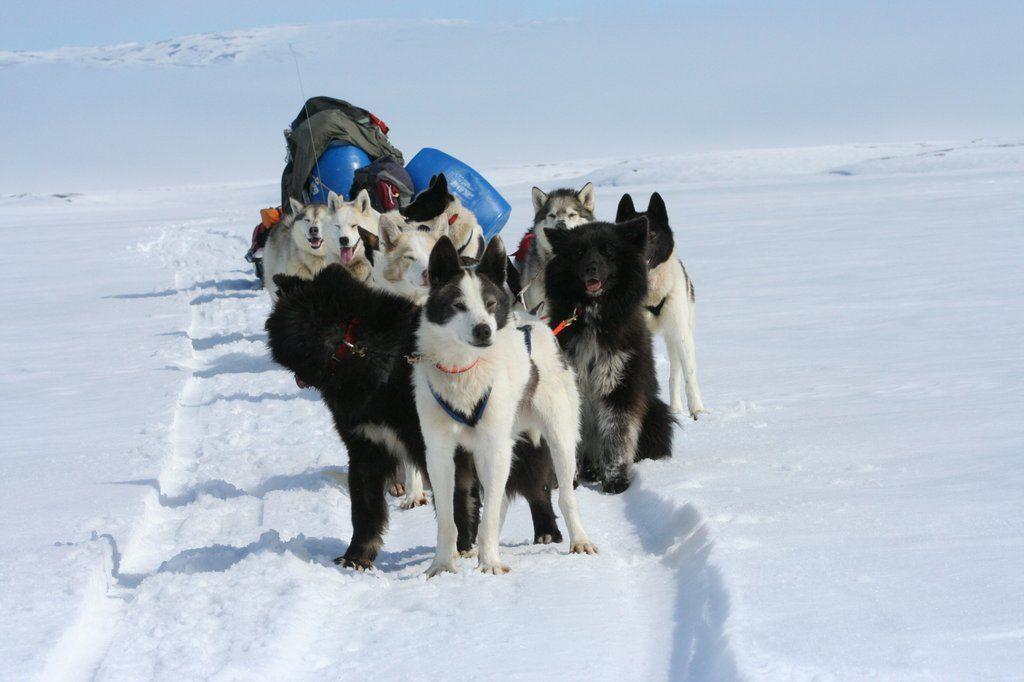 казанская экспедиция клуб ездовые собаки таймыр