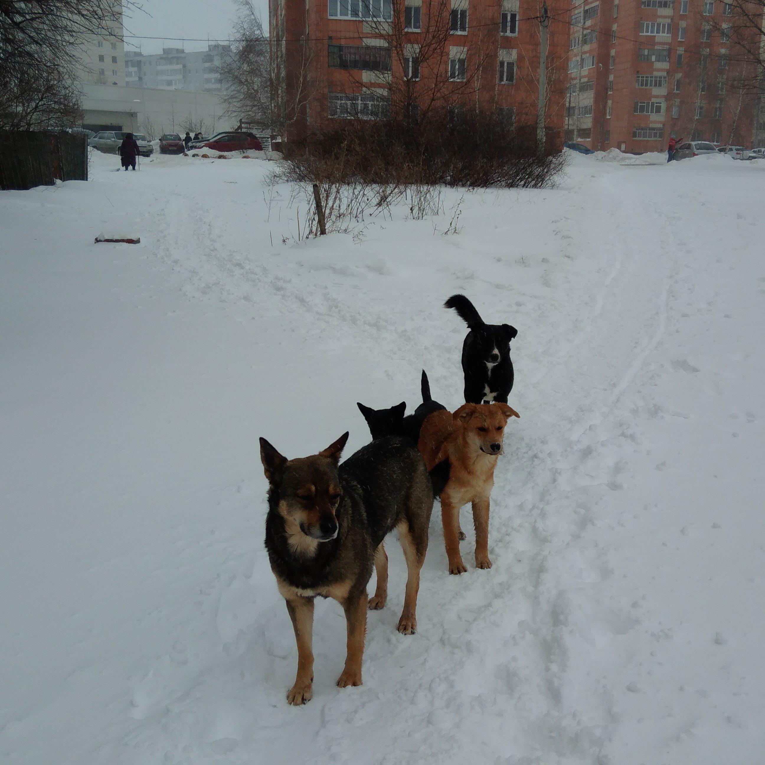 Собаки Казань24