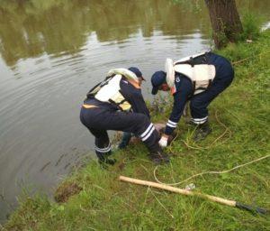 Татарстанец утонул, гуляя с собакой